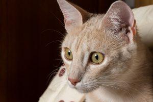 Fotografiere keine Katzen. Nahaufnahme Katzengesicht.